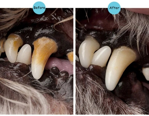dog teeth cleaning kit